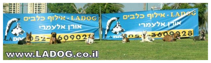 פקודת ארצה מרחוק בקורס אילוף כלבים בחברת-LADOG